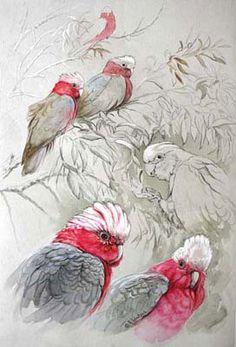Paintings of parrots, parrot painting, Parrot art Watercolor Bird, Watercolor Animals, Galah Cockatoo, Australian Parrots, Parrot Painting, Bird Sketch, Bird Silhouette, Bird Illustration, Bird Drawings