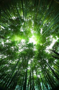 Healing Body and Soul Through the Japanese Art of Shinrin Yoku - Forest Bathing 2 - Copy (2)