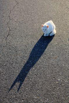 白猫と黒猫 White cat & Black cat -  KaZuさん