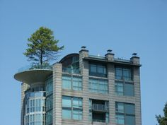 Vancouver tree on the building roof