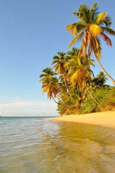 Paradise beach, Pigeon Point, Tobago by Irene Amiet