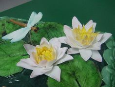 Sugar Water Lilly