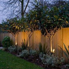 back yard trees along fence easy backyard landscaping on modern fence ideas highlighting your house with most shared privacy fence designs id=53853