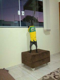 Eu quero comemorar lá fora! Colaboração: Vivian Ferreira #worldcup #copadomundo #vaitercopa #vaibrasil #brasil #dog #doglovers