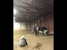 Girl acts sad to see how her horse will react. - YouTube Horse Story, Capricorn Sign, Special Pictures, Faith In Humanity Restored, Story Video, Cheer You Up, Creative Illustration, All Things Cute, Animal Memes