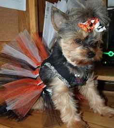 This is the cutest of the cute! Orange Black and White Halloween Dog Tutu in by GlamourDogBoutique, $7.00