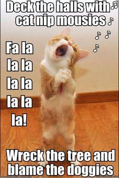195 Best Merry Xmas from Dog & Cat images | Animais adoráveis ...