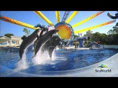 SeaWorld Orlando!