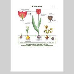 Jarné kvety Jar, Tulips, Jars, Glass