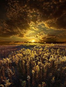 Golden by Phil Koch - I created the series of Horizons in 2010 as photographic journey through the landscapes of Wisconsin. I rarely shoot in the same location as the sun rises and find the meadows that most just drive by without a second thought as the best place to wait and watch. Click on the image to enlarge.