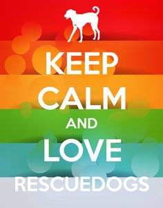 Save rescuedogs