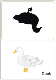 matching pictures to shadows worksheets Puzzle Books, Toddler Learning, Montessori, Worksheets, Kindergarten, Snoopy, English, Sorting, Shadows