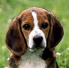 Beagle Puppy - Watercolor Painting by George Pedro