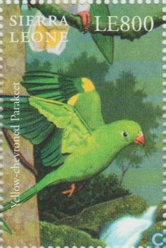 Sierra Leona-Periquito Amarillo