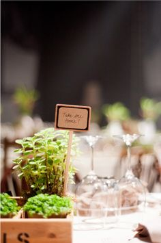 Plants can double as wedding favours too!