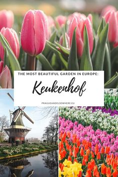 Visiting The Most Beautiful Garden in Europe, Keukenhof, Netherlands | Netherlands Travel Tips | Day Trip From Amsterdam | Amsterdam Travel Tips #netherland #keukenhof #spring