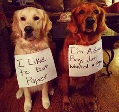 It's the second dog that makes me giggle!