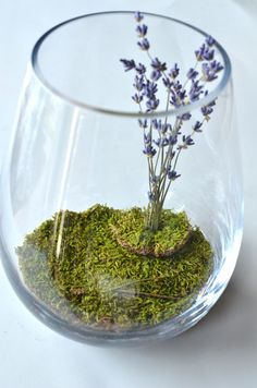 Dried lavender terrarium- NO watereing required!