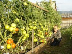 """Zknihy Igora Ljadova: Minimum práce – Maximum úrody """"Začnem spomienkami zdetstva, ktoré priamo súvisia snašou témou. Boli to ťažké roky Veľkej vlasteneckej vojny. Na dedinách ľudia žili iba ztoho, čo získali zo záhradiek. Azakaždým, … Read More Pumpkin, Fruit, Outdoor, Vegetable Garden, Garden, Red Peppers, Outdoors, Pumpkins, Outdoor Games"""