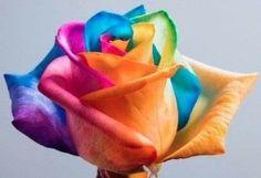 Easy Rainbow Rose