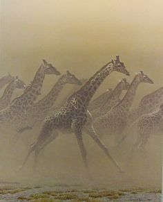 """Galloping Herd - Giraffes"" by Robert Bateman"