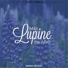 April Showers bring May Flowers, making Sherwin-Williams paint color Lupine (SW 6810), the perfect choice for our May Color of the Month.