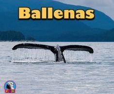 Ballenas: Vida Oceanica/Mam�feros Marinos  Una Presentaci�n en Powerpoint; Los estudiantes conocer�n y aprender�n sobre las caracter�sticas que definen a:   - Las Ballenas - Las dos familias: Ballenas dentadas y ballenas Barbadas - Sus h�bitats - Sus dietas - y mucho mas.  Por Ryan Nygren (foto por Aconcagua - http://commons.wikimedia.org/wiki/File:Whale_tail_near_Juneau,_Alaska.jpg