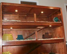 Cavy Condo #6 - Guinea Pig Cage Photos