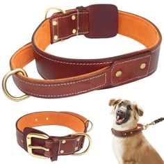Premium Soft Padded Leather Dog Collar With Handle Brown Handmade Genuine Real Leather Collars For Medium Large Dogs L XL - FOR PET ANIMALS. Products for cats and dogs