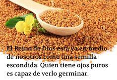 El Reino de Dios está ya en medio de nosotros como una semilla escondida. Quien tiene ojos puros es capaz de verlo germinar.