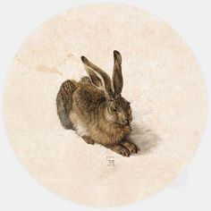 Albrecht Dürer (German, Northern Renaissance, The Hare (Der Feldhase) (also known as: The Young Hare; The Wild Hare), Watercolor and bodycolor (gouache) on a cream wash Albrecht Durer, Albertina Wien, Renaissance Kunst, High Renaissance, Renaissance Artists, Renaissance Paintings, Google Art Project, Art Graphique, Famous Artists