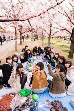 Hanami party : Osaka Castle, Japan
