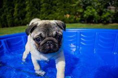#Pool für #Hunde im #Sommer! Jetzt! http://www.kaltwetter.com/kuehltipps-fuer-hunde/