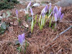 Wiosna zawitała do ogrodu http://ogrodwmiescie.pl/wiosna-zawitala-do-ogrodu/