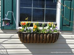 I took some tete tete daffodil bulbs and tulips that I got on clearance and planted this window planter with violas to fill in around the bulbs. The lantern is solar powered so it adds interest in the evenings. mysmallgardenparadise.com