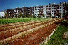 Agricultura Urbana: o que Cuba pode nos ensinar
