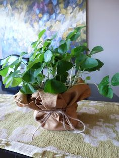 Oxalis plant wrapped in cloth napkin with twine