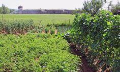 O casi. La rotación de cultivos, que consiste en cambiar las plantas de sitio cada temporada siguiendo unas reglas básicas, ayuda a preservar el suelo, obtener mejores producciones y reducir el gasto en abono y pesticidas