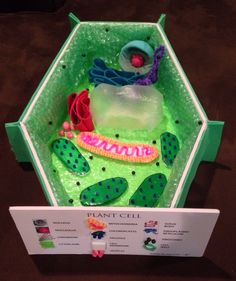 Plant cell 3D model for 7th grade science class. Got an A!