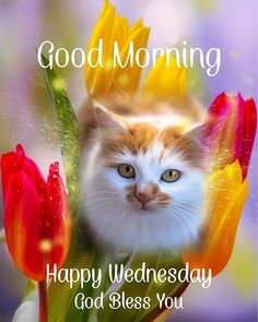 Happy Wednesday Quotes, Good Morning Wednesday, Good Morning Happy, Good Morning Quotes, Morning Blessings, God Bless You, Jesus Christ, Prayers, Blessed