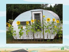 Sunflowers and caravan!