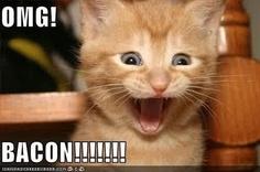 @Elizabeth Lockhart Lockhart Hunter LOL- and I don't even like bacon, I mean, cats! I don't even like cats! Love bacon.