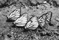 I love butterflies!!!