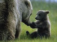 animals with babies - Buscar con Google