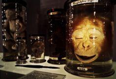 Los Museos más extraños de Londres