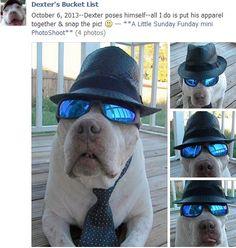 Love it!!! Check Dexter out on Dexter's Bucket List on Facebook!!!