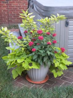 Annual Flower Container Ideas:  red twig dogwood branches (overwintered stems, leafed out), pentas, potato vine.  Bonus:  hummingbirds love pentas!