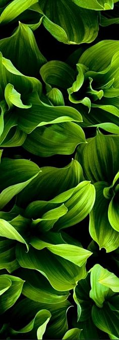 New plants background green leaves ideas Plant Texture, Green Texture, Leaf Texture, Green Leaves, Plant Leaves, Plant Background, Background Ideas, Plant Wallpaper, Plant Aesthetic