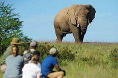 Safari South Africa – Lesbian Travel