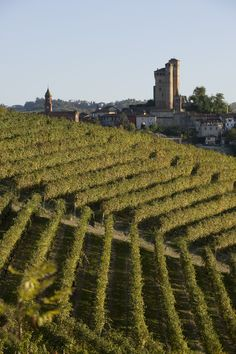 Vietti Vineyards, Piedmont, Italy